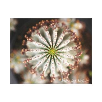 Succulent Photo by Debra Lee Baldwin Canvas Print