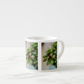 Succulent Plant Anacampseros Rufescens Sunrise 6 Oz Ceramic Espresso Cup
