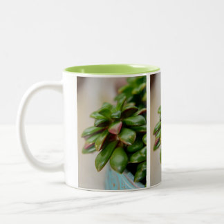Succulent Plant Anacampseros Rufescens Sunrise Two-Tone Coffee Mug