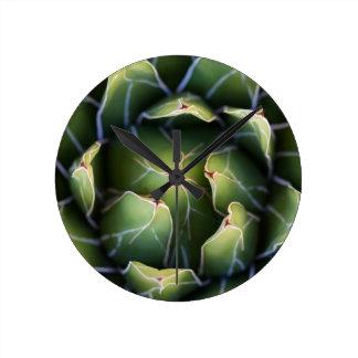 succulent plant clock