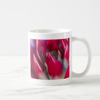 succulent plant coffee mug
