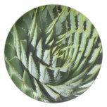 Succulent plant dinner plate: Aloe polyphylla Melamine Plate