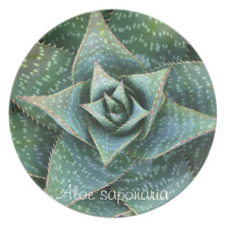 Succulent plant dinner plate: Aloe saponaria