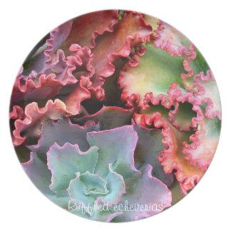 Succulent plant dinner plate: Ruffled echeverias