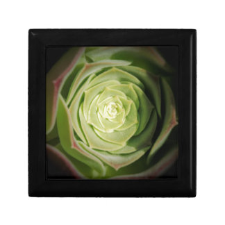 succulent plant gift box