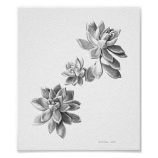 Succulent plant graphite drawing poster