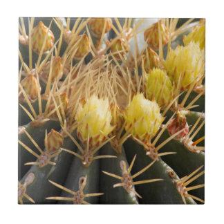 succulent plant in the garden ceramic tile