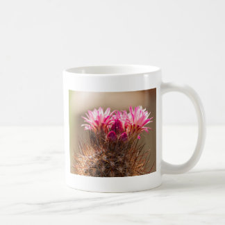succulent plant in the garden coffee mug