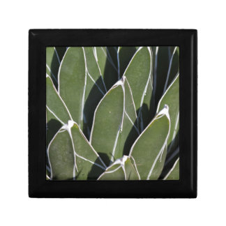 succulent plant in the garden gift box