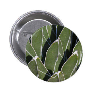 succulent plant in the garden pinback button