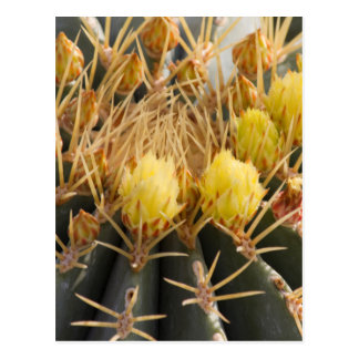 succulent plant in the garden postcard