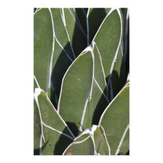 succulent plant in the garden stationery