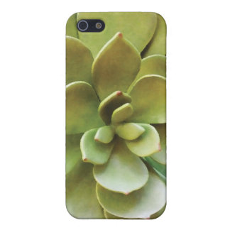 Succulent Plant iPhone 5 Case
