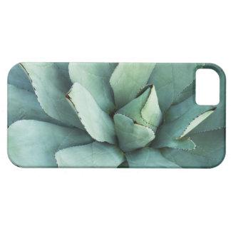 Succulent Plant Iphone Case / Phone Case