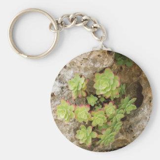 succulent plant keychains