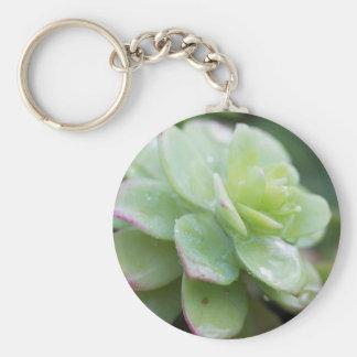 succulent plant key chain