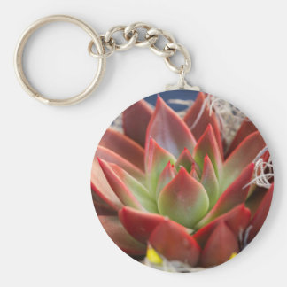 succulent plant key chains