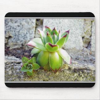 succulent plant mouse pads
