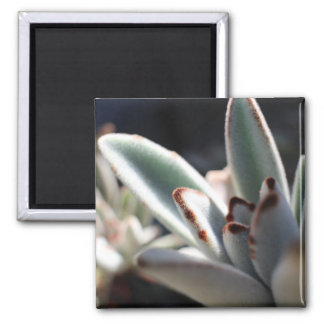 Succulent Plant Photo Magnet