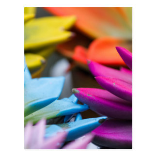 succulent plant post cards