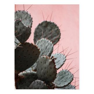 succulent plant post card