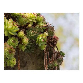 succulent plant postcard