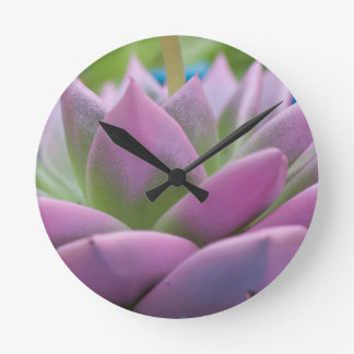 succulent plant round clock