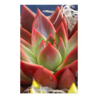 succulent plant stationery