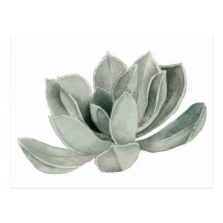 Succulent Plant Watercolor Painting Postcard