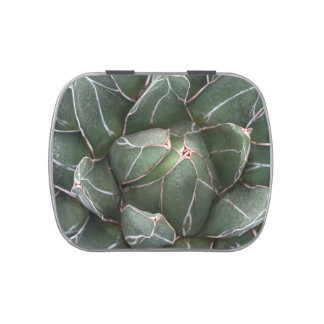 Succulent Plant White Jelly Belly™ Candy Tin