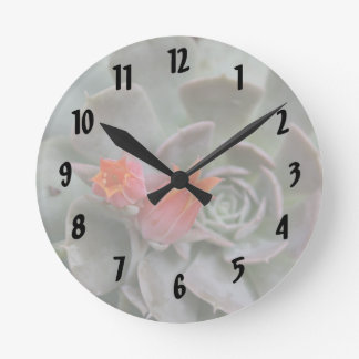 Succulent plant with orange flower round wall clocks