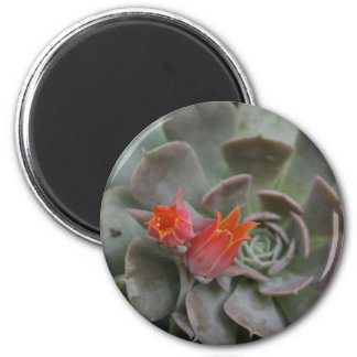 Succulent plant with orange flower refrigerator magnets