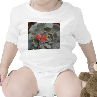 Succulent plant with orange flower rompers