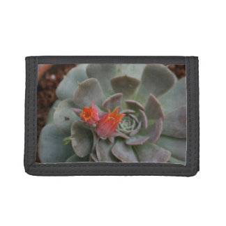 Succulent plant with orange flower trifold wallet
