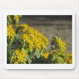 Succulent plant with yellow flowers mouse pad