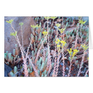 Succulent Plants Greeting Card | Stone Crop