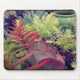 Succulent Plants Mouse Pad