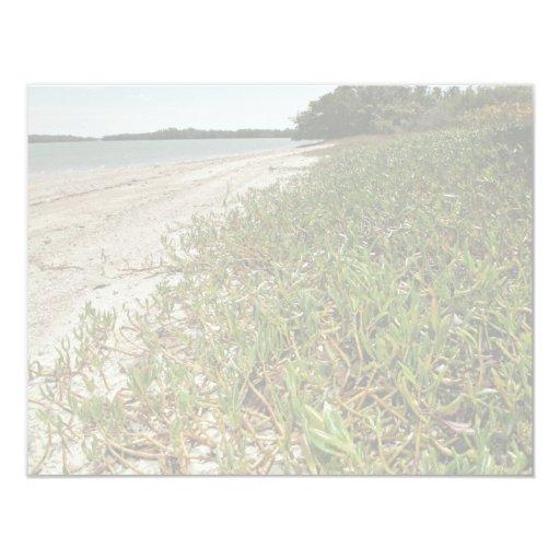 Succulent plants on beach personalized announcement