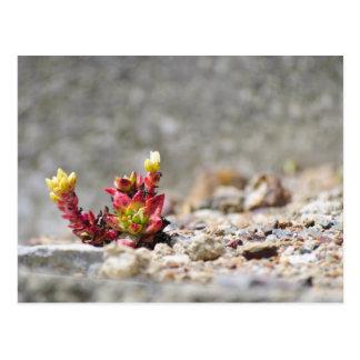 Succulent Plants Postcard