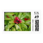 Succulent Plants Stamp