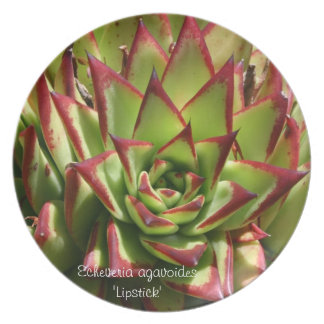 Succulent plate: Echeveria agavoides 'Lipstick' Melamine Plate
