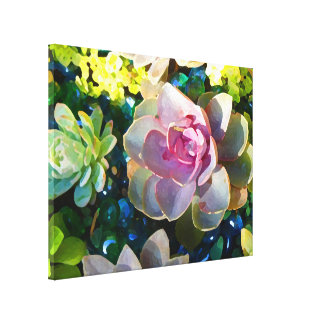 Succulent Pond by Amy Vangsgard Stretched Canvas Prints