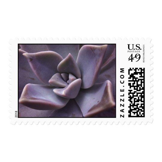 succulent postage