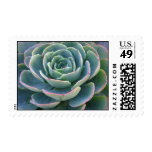 Succulent Postage Stamp
