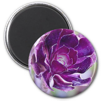 Succulent púrpura imán redondo 5 cm