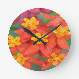 Succulent Red and Yellow Flower 2 Wall Clocks