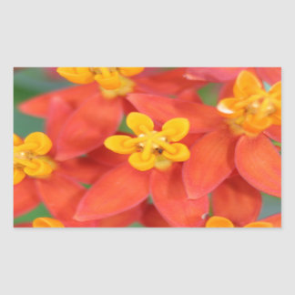 Succulent Red and Yellow Flower 2 Stickers