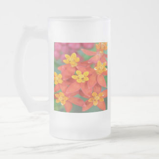 Succulent Red and Yellow Flower Echeveria Frosted Glass Beer Mug