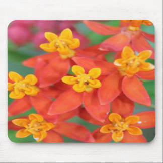 Succulent Red and Yellow Flower Echeveria Mouse Pad