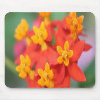 Succulent Red and Yellow Flower III Mouse Pad